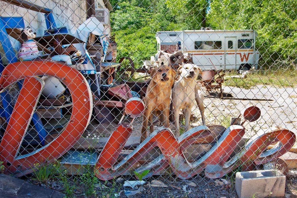 Lucinda Bunnen, Dixie Dogs, 2014